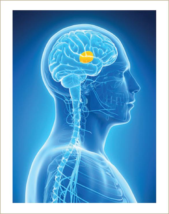 Brain D2